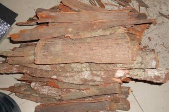 非洲卡宾达树皮有什么用
