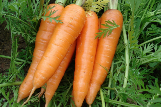 含维生素a的蔬菜和水果