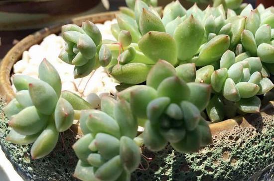 护花神杀虫剂怎么使用