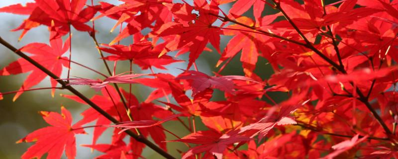 松坪沟红叶最佳时间