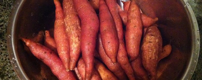 血管地瓜是什么品種