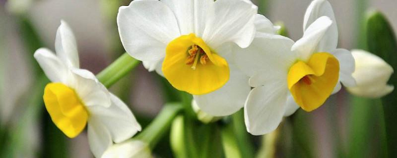 观察水仙花生长过程