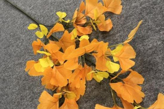 银杏叶是什么季节开的
