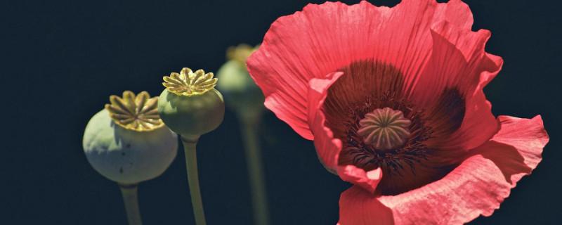 什么花的花语是怀念盼归