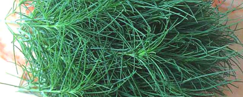风滚草在中国叫什么名字