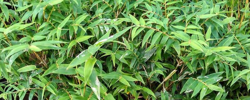 凤尾竹养殖方法六大要技