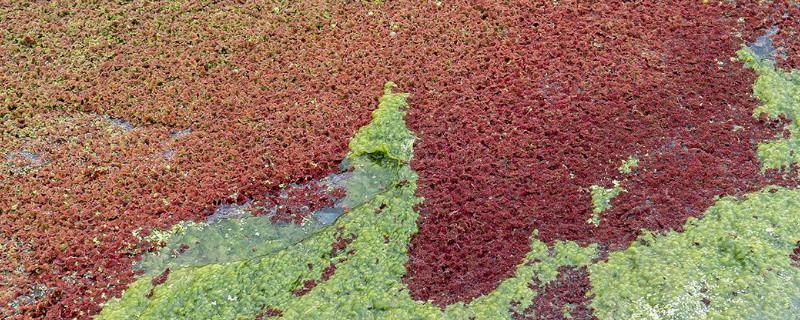 满江红植物几级保护植物