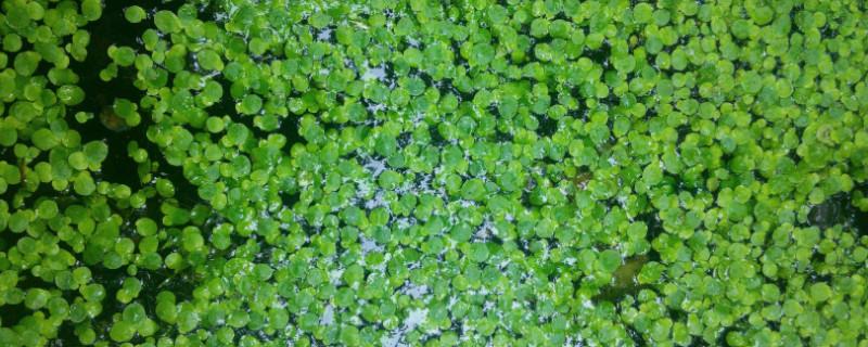 满江红植物有种子吗