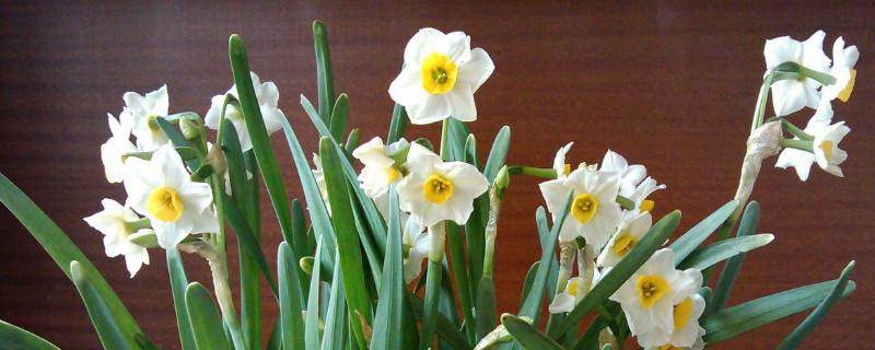 水仙花是什么季节什么时间开放
