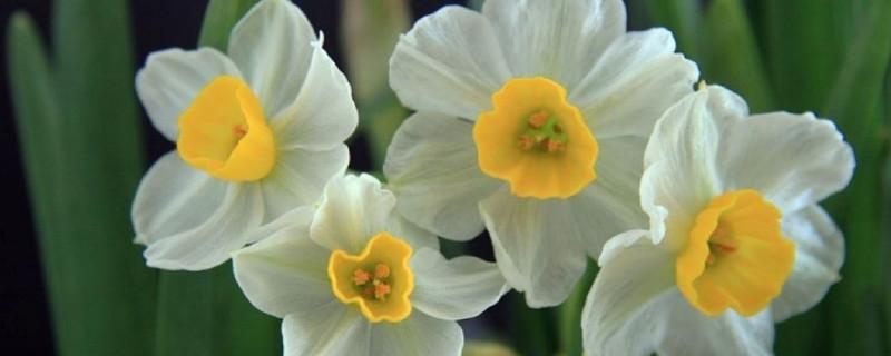 水仙花是哪个市的市花