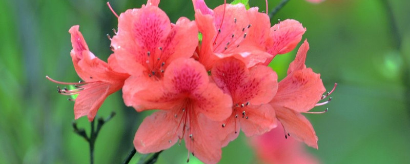 杜鹃花是什么季节开的