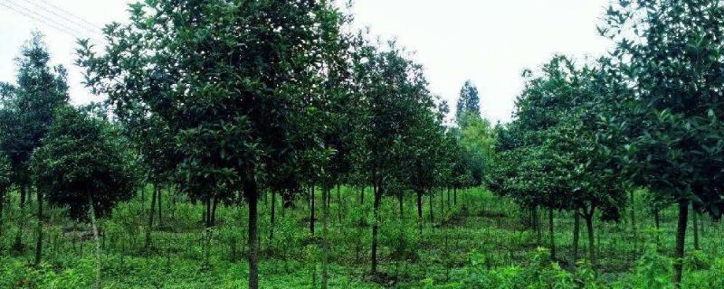 灌木和乔木区别