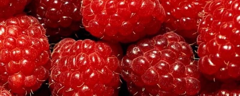 树莓是什么季节的水果