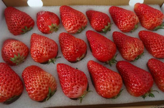 辽宁丹东草莓几月份上市