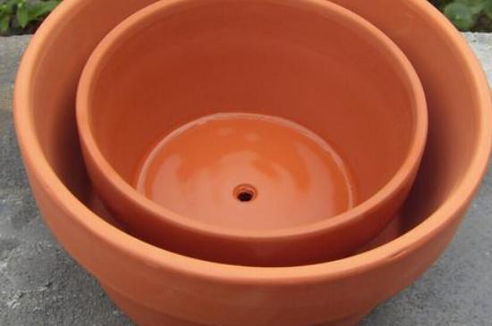 适合种玉树的花盆