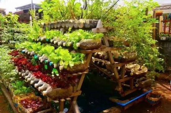 种菜浇水最佳时间