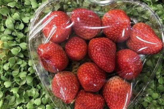 红宝玉草莓产自哪里