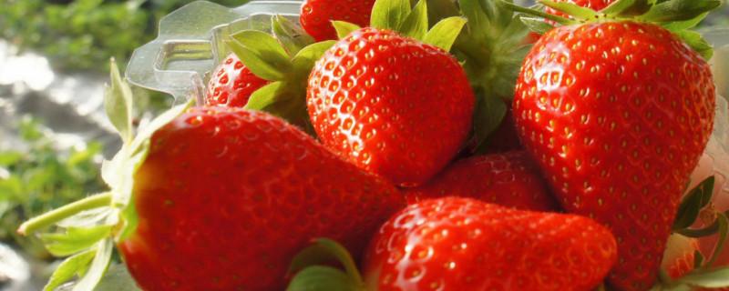 草莓的外形特点和味道
