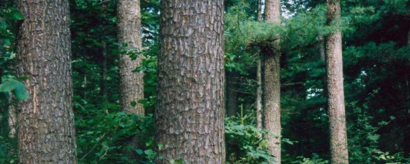 母树林和种子园有什么区别