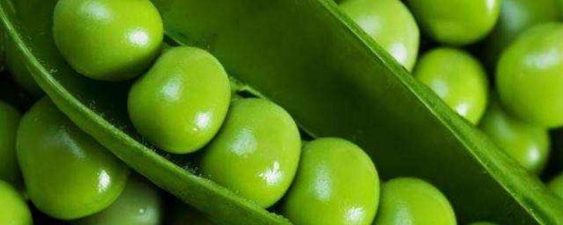 豌豆是什么植物