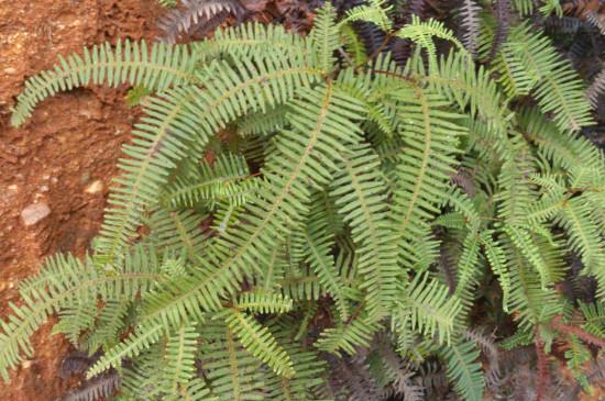 为什么裸子植物植株比蕨类植物的植株高大
