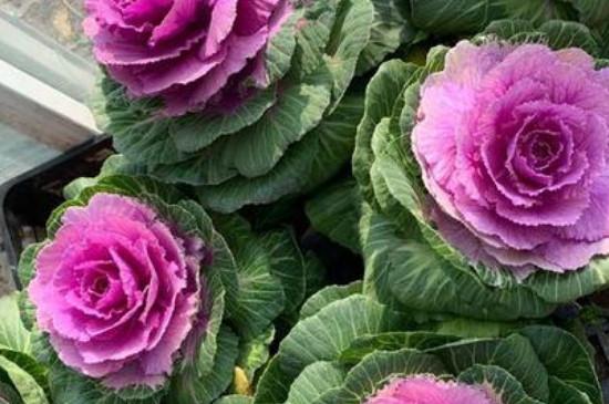 冬季花卉怎么养护