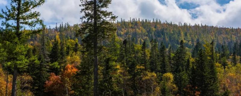 针叶林在我国哪些地区比较常见