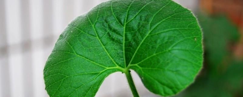 植物光合作用的场所