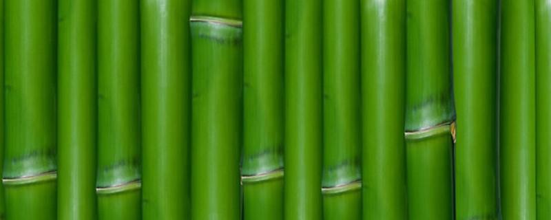 竹节的寓意和象征