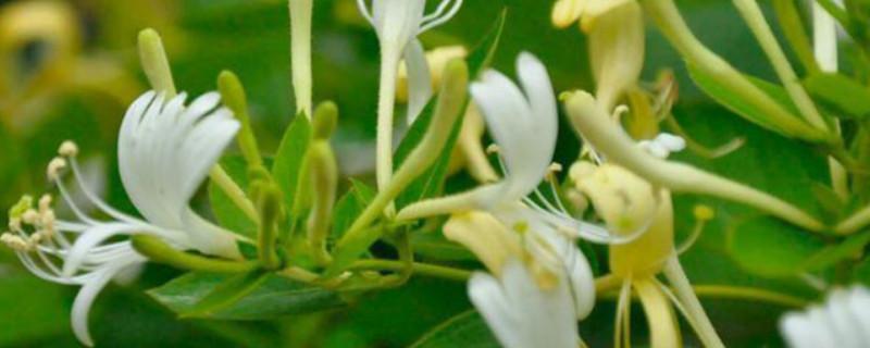 北花一號一年開幾次花