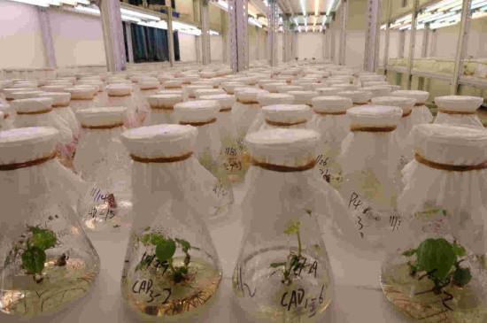 植物组织培养技术的地位