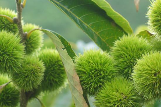 种子植物和被子植物的区别