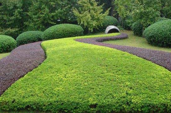 园林植物的生态功能
