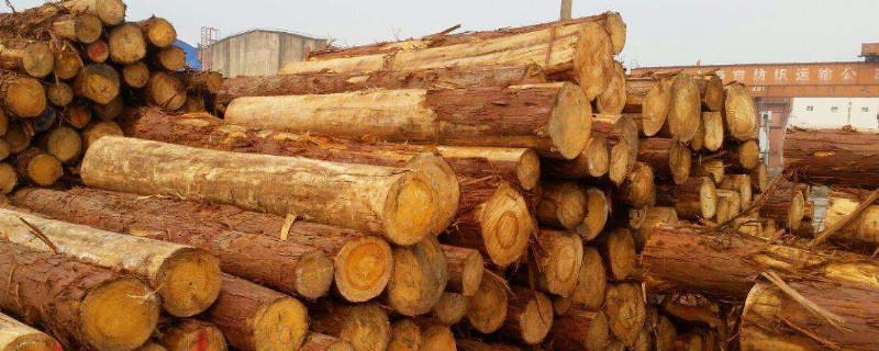 桧木是什么木材