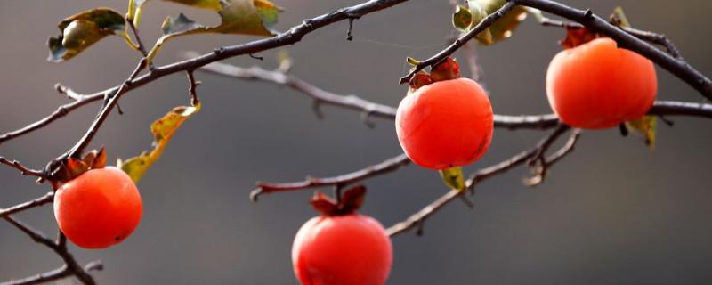 秋天的果实有哪些成熟