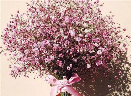 不同花色的满天星花语