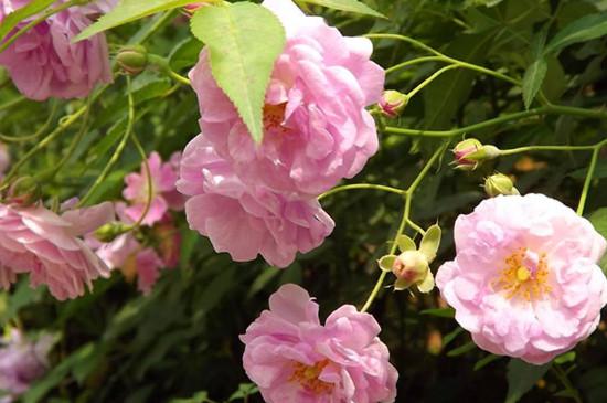 春季花卉都有哪些品种