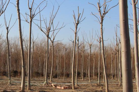 四月可以种树吗