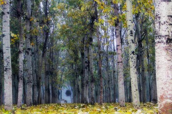 景观树种类前十名