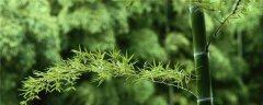 竹子的象征意义