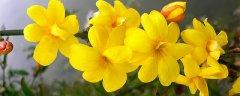 春天有哪些花