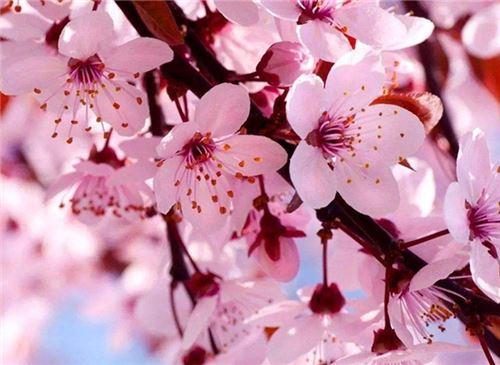 四月开什么花