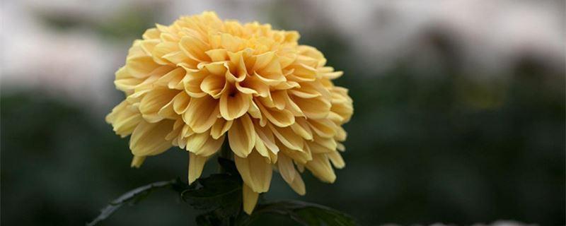 花中四君子是指哪些植物