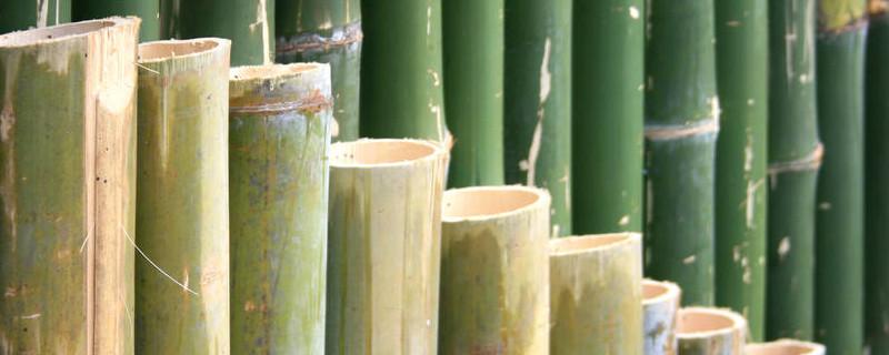 竹子是被子还是裸子植物