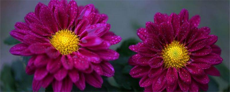 秋天的花有哪些