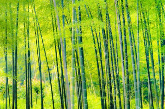 竹子能吃吗