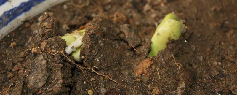 种菜撒籽后要马上浇水么