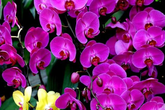紫气东来花的养殖方法
