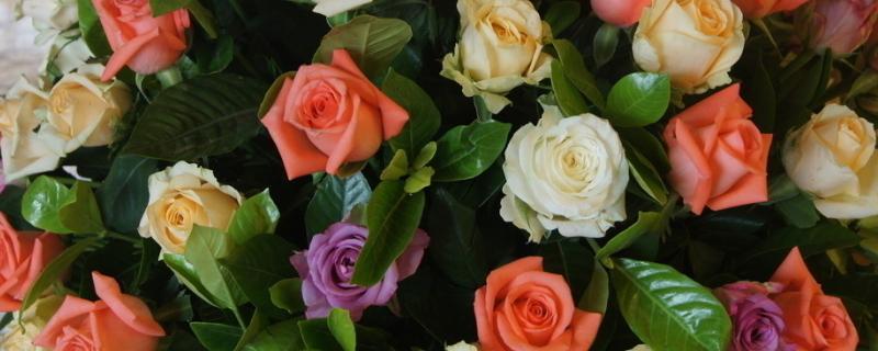 送九朵玫瑰花的含義