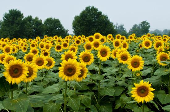不怕暴晒的60种植物